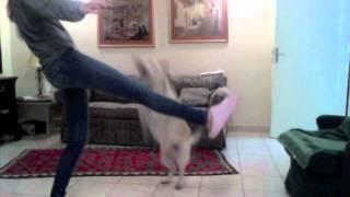 Operant Conditioning- Dog Training