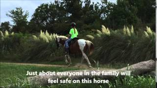 Confidence-building Spotted Saddle Horse Mare For Sale