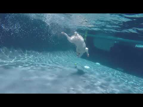 Supercool underwater swimming by Brittany Spaniel Therapy Dog Korra.