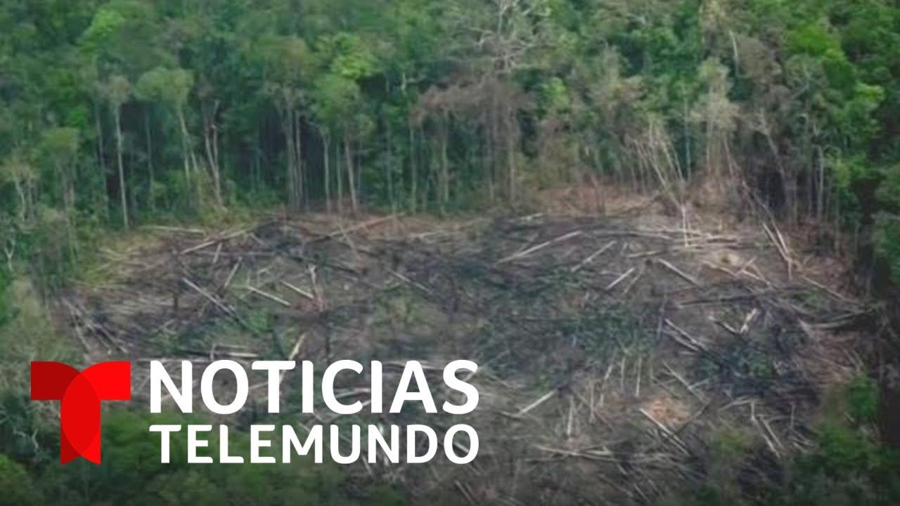 Planeta Tierra: Advierten sobre la deforestación del Planeta   Noticias Telemundo