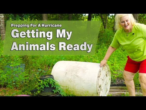 Getting My Animals Ready For A Hurricane: Prepping My Homestead