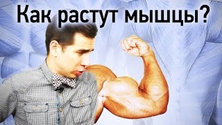 Физика качалки: как растут мышцы?(, 2015-07-07T06:15:52.000Z)