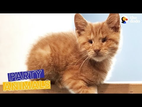 Blind Cat Who Was Almost Put Down Celebrates His Rescue Anniversary | The Dodo Party Animals