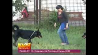 Как успкооить агрессивную собаку? Утро с Губернией. GuberniaTV