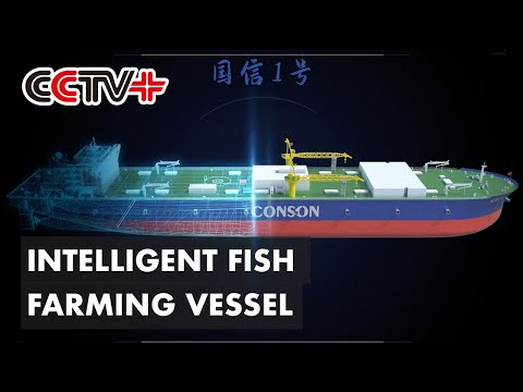 Construction of World's First 100,000 dwt Intelligent Fish Farming Vessel Begins in East China