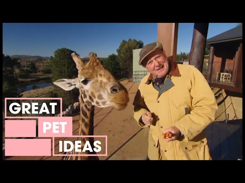 Dr Harry Visits The Zoo   Pets   Great Home Ideas