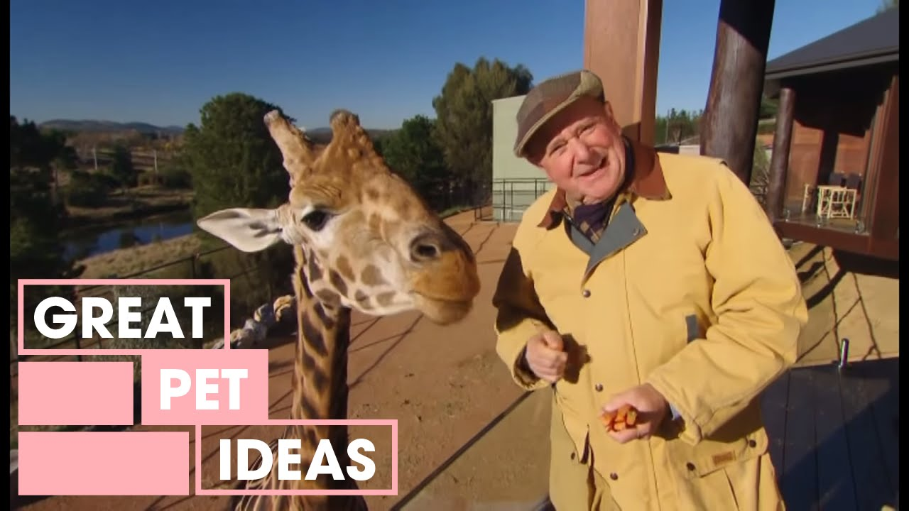 Dr Harry Visits The Zoo | Pets | Great Home Ideas