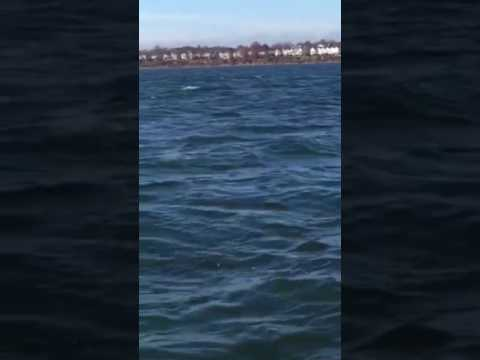 Whales in Staten Island NY