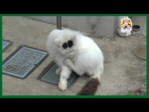 Японские породы кошек с фотографиями -