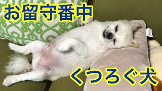くーちゃんの休日(私の休日2018/6/3) たくさんお昼寝して公園へ お散...