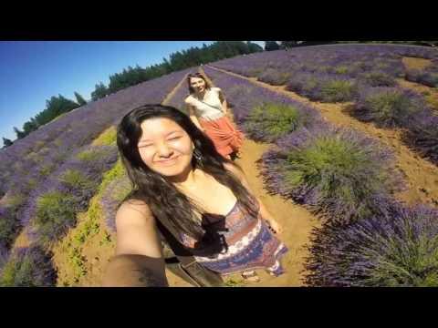 Oregon Lavender Festival