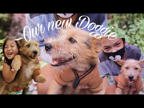 Our New Doggie | My Australian Terrier Dog