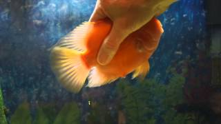 My Fish Loves Me! He would rather play than eat!