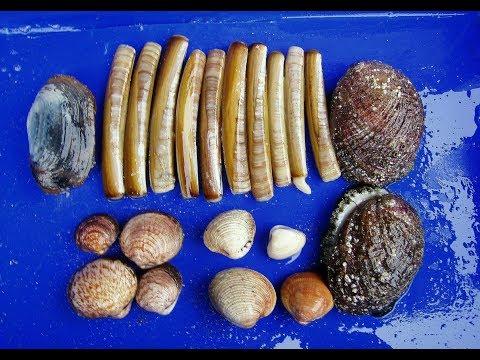 Coastal Foraging - Razor Clams, Ormers, Lobster, Spider Crab, Cockles, Fish, Shrimp,  Cooking Razor