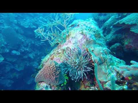 Grand Cayman 2017