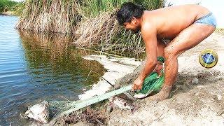 Pescador Atrapa Tremendas Tilapias  de Laguna