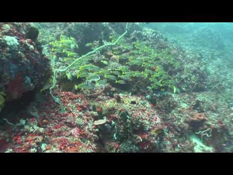 Batu Gosok - underwater diving
