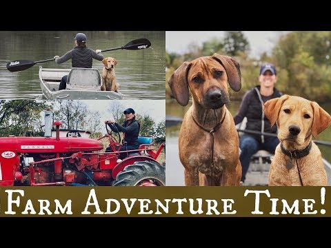 Rhodesian Ridgeback and Labrador Retriever | Dog Training Adventure!