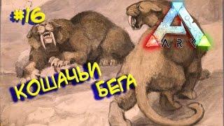 Ark survival evolved - HARDCORE v2.0 (Кошачьи бега) #16
