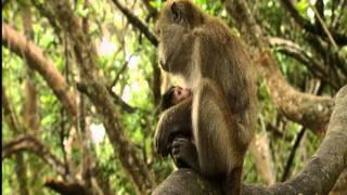 ANIMAL SAPIENS (documental completo)