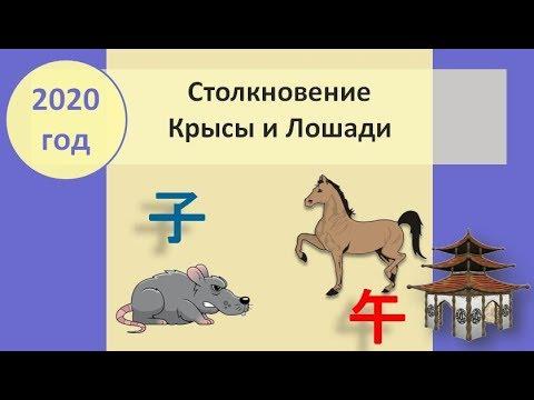 Столкновение Крысы и Лошади в 2020 году