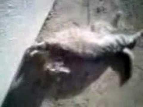 chat de phenix-dz thumbnail
