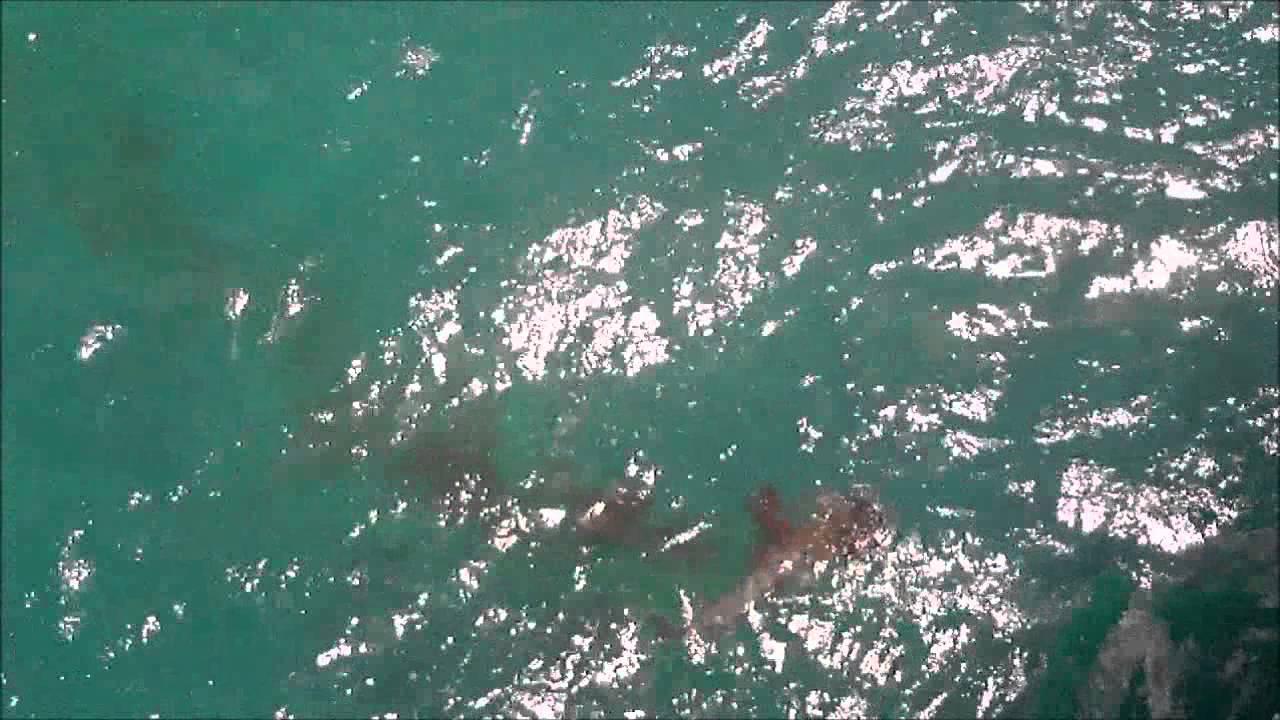 Juno beach fishing pier barracuda eats bonita youtube for Juno pier fishing report