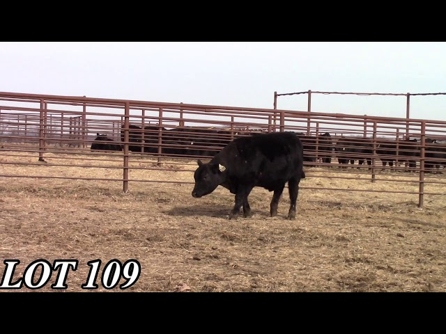 Mead Angus Farms Lot 109