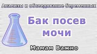 видео Как сдавать анализ мокроты: процедура, правила, советы