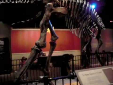 Hadrosaurus Foulkii exhibit