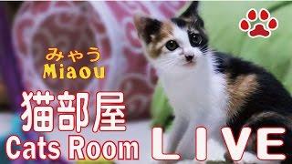 2018.4.1 猫部屋ライブ映像   Cats & Kittens room 【Miaou みゃう】