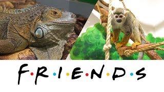 Дружба игуаны и обезьянки в контактном зоопарке Екатеринбурга