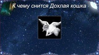 К чему снится Дохлая кошка (Сонник)