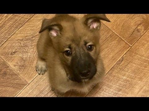 Подруга просила приютить щенка, которого бросили. Девушка не соглашалась, пока не увидела его фото