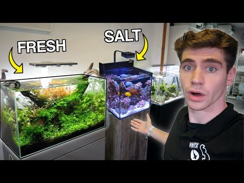 The *BEST* Aquariums In England...  (Freshwater & Saltwater)