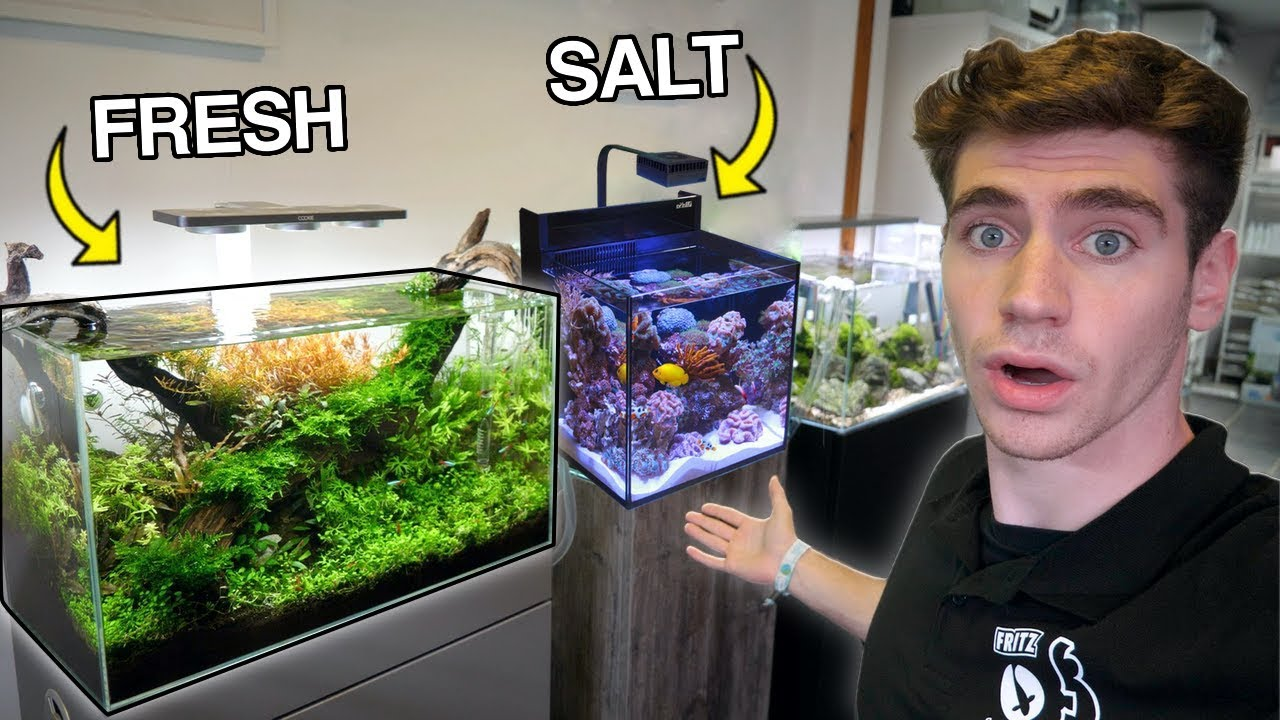 The *BEST* Aquariums in England... (Freshwater & Saltwater) - YouTube