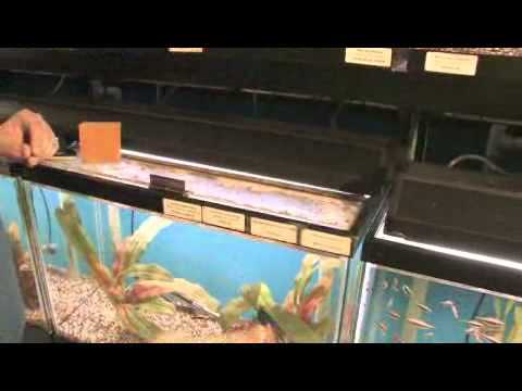 How To Remove Oxidation From Aquarium Glass