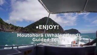 Tour to Whale Island