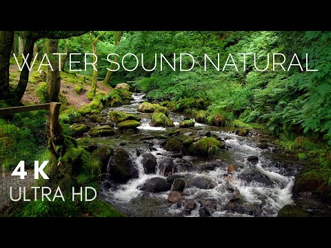 Water Sound Nature Meditation - Rainforest Sounds | Relaxing Music Station