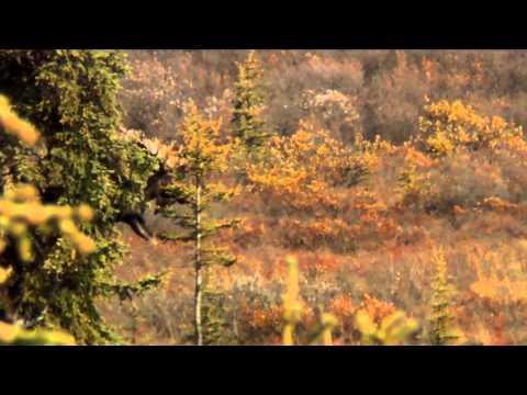 Nosler's Magnum TV  - Alaska on Edge Part 3