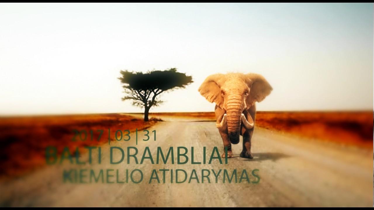 Yra dramblių tryniai, tinkami svorio metimui Klausimai | Lieknieji Gurmanai