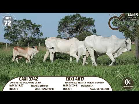 LOTE 72   CAXI 4017, CAXI 3742