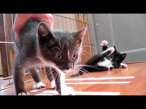 40 Foster Cats & Kittens And Counting