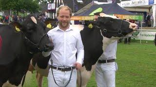 Gwartheg Llaeth Bridio gan y Tywysydd | Exhibitor Bred Dairy Cattle