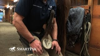 The Safe and Smart Way to Pick Up Your Horse's Back Feet