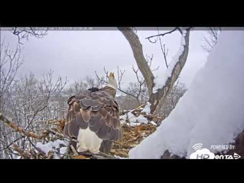 Bald eagle nestcam at Hanover, Pennsylvania