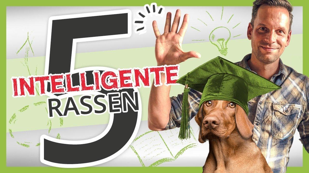 21+ Hundebox   Eingewöhnung, Training, Verwendung   YouTube Kollektion