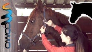 Colocando Cabresto num Cavalo