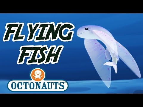 Octonauts - Flying Fish | Sea Missions with the Octonauts