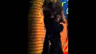 Кошка вылизывает собаке порванный после драки глаз)))